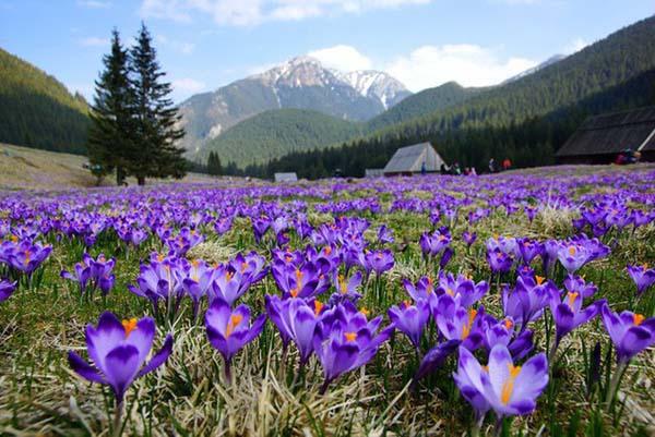 Saffron là gì bạn đã biết chưa?